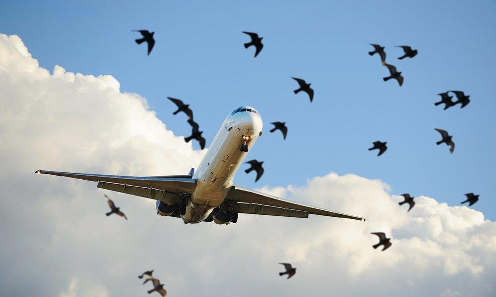 Veľké vtáky v úzkych otvorov